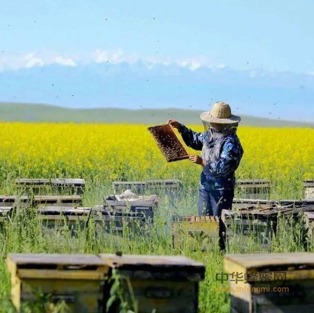 【蜂蜜醋减肥】_为什么市面上很少有油菜蜜卖?