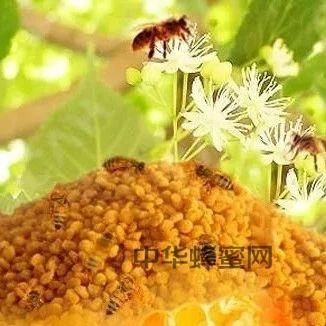 【蜂蜜 枸杞】_蜂花粉的详细功效和用法,真是太厉害!