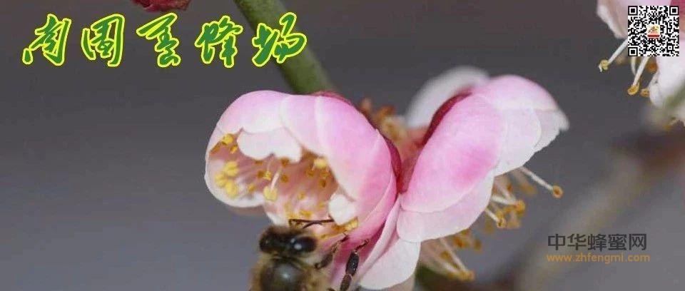 一箱蜜蜂一年产多少蜂蜜