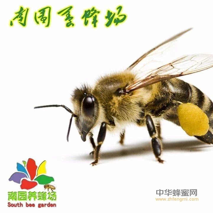 神秘的蜂毒