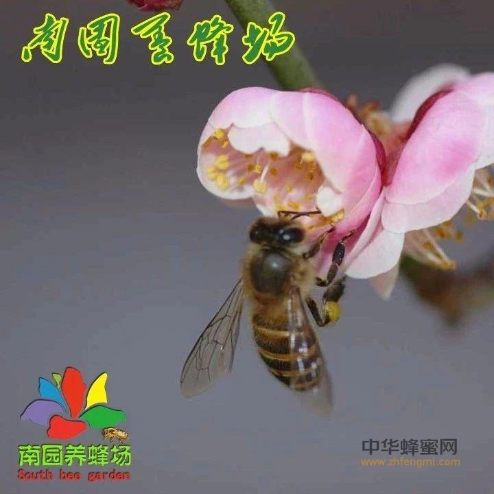 蜂胶什么时间吃最好