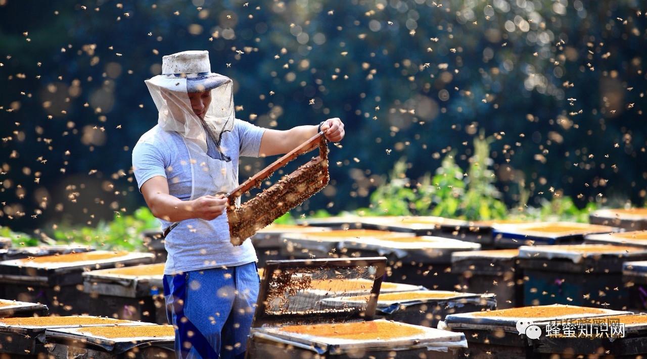 农村找对象,专挑养蜂家庭。