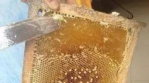 把蜂蜜倒在水里摇了摇,结果神奇的一幕出现了..