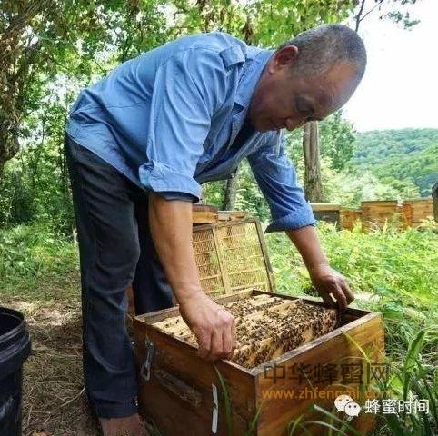 蜜蜂养殖管理技术探究!