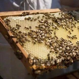 【蜂蜜与四叶草插曲】_查蜂,能不开箱就不开箱,摸索箱外观察的方法