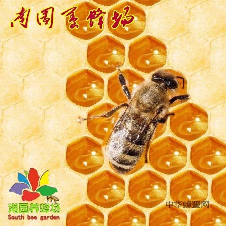 【蜂蜜水】_蜂蛹吃多了有危害吗