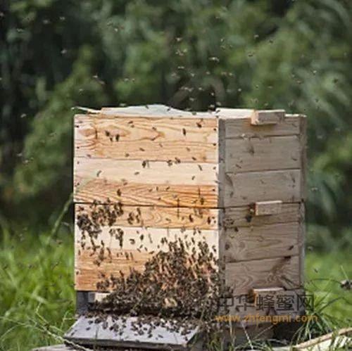 【蜂蜜吃】_蜜蜂螺原体病防治方法