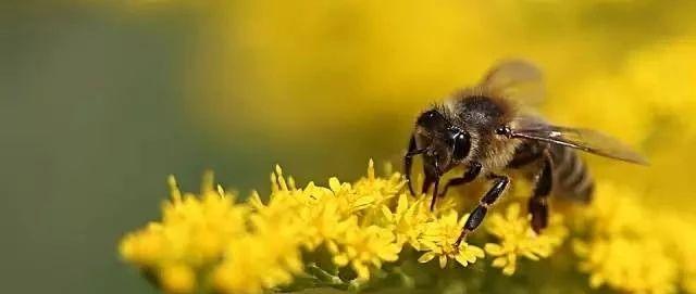 神奇的蜂蜜,中医教你怎么吃最养生!