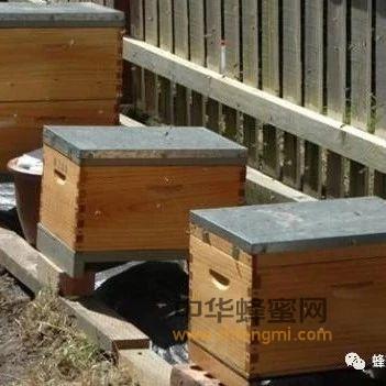 我的养蜂观察与体会