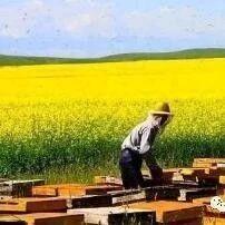 【蜂蜜水】_养 蜂 谚 语