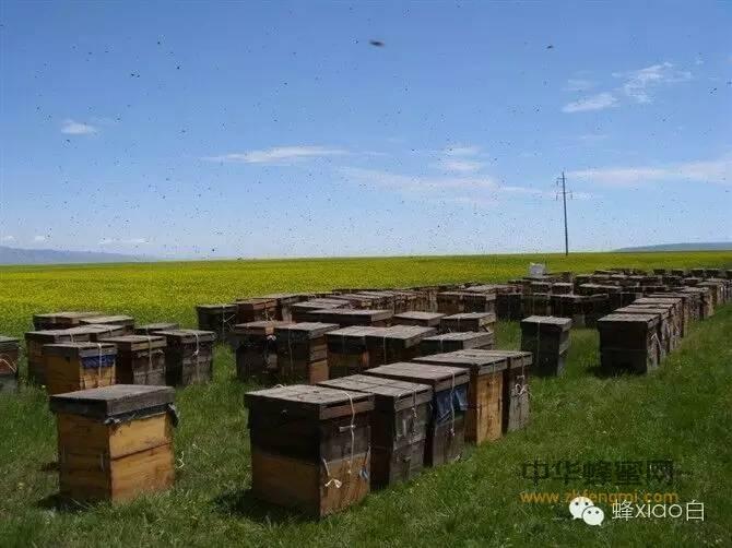 市场蜂蜜价格差别大