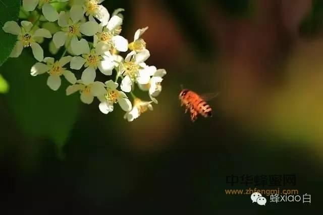 你知道蜂蜜可以解酒吗?