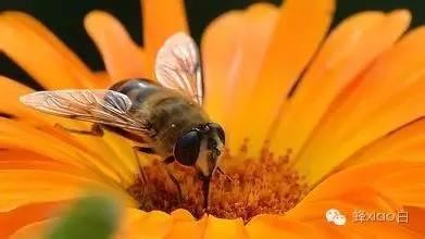 哺乳期可以喝蜂蜜水吗?