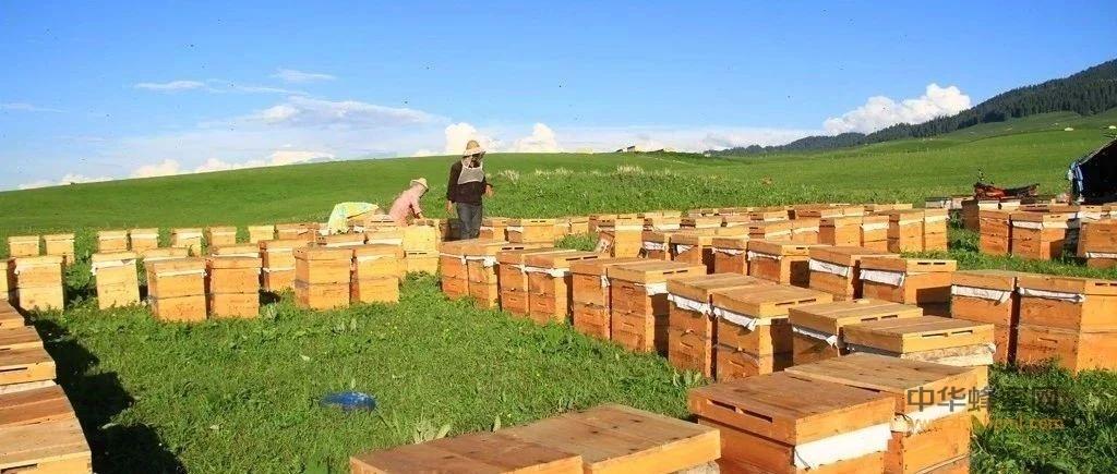 什么是野生蜂蜜、纯蜂蜜、天然蜂蜜?