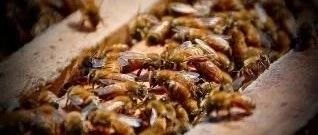 你不知道的蜜蜂世界(一)