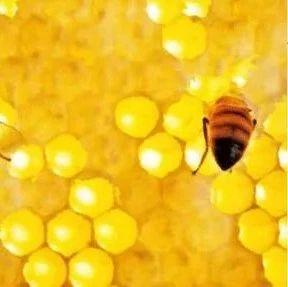 蜜蜂睡觉吗?