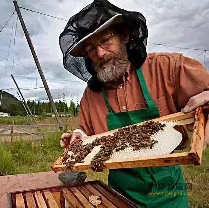 养蜂人为什么会长寿?