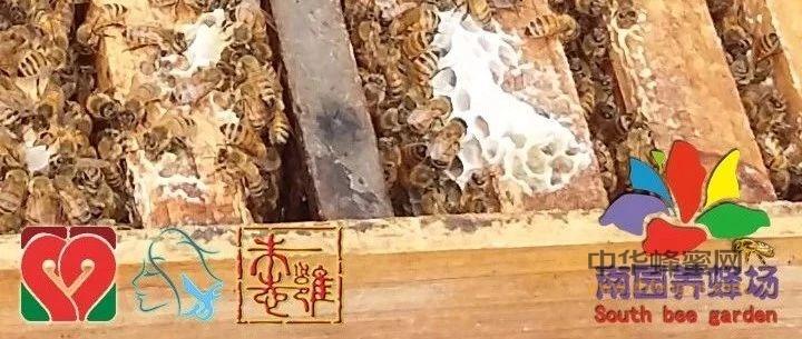 【蜂蜜水喝】_蜂王浆——让你的肝脏更健康!让肝炎、肝硬化离你远远的!