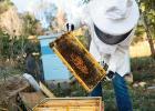 养蜂 养蜂人 养蜂故事 黑龙江