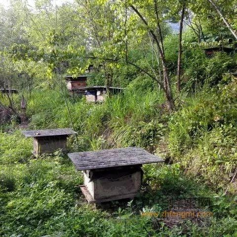 【牛奶 蜂蜜】_根治巢虫方法总汇