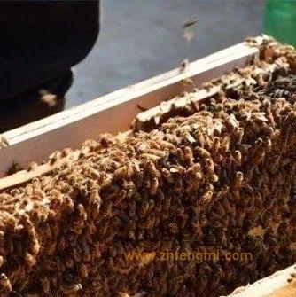 【蜂蜜水加醋】_蜂王浆高产的分组垫框法