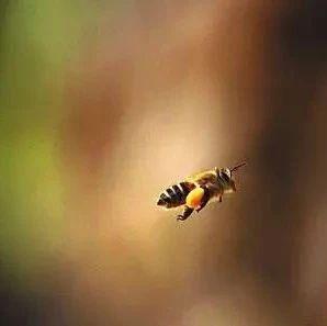 养蜂受哪些因素影响
