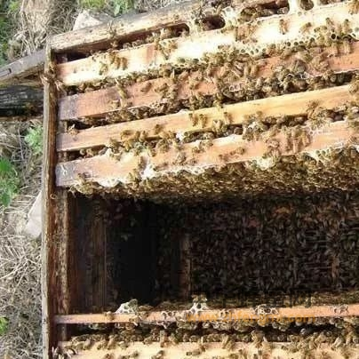 巢温和蜂巢设置