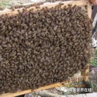 拯救冬季饿伤的蜜蜂
