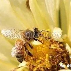 蜜蜂春季饲养经验谈