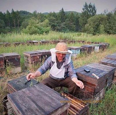 蜂群冬季巧管理!