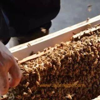 养蜂单脾开繁技术要点解析