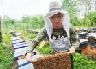 蜂王 养蜂人 甜蜜事业 朱峰