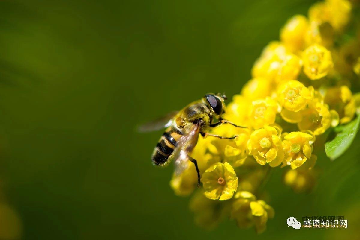 蜂业文化:被蜜蜂蛰了,最好的疼痛安抚:写诗!!!
