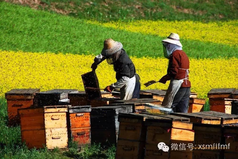 性价比之王——油菜蜜,这是春天的礼物!