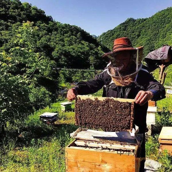 蜂群春季管理方案