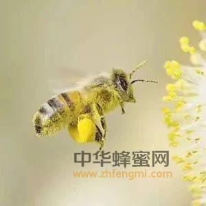 蜜蜂黑蜂病防治方法