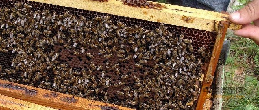 【蜂蜜的用途】_养蜂多备几个蜂箱,太重要了