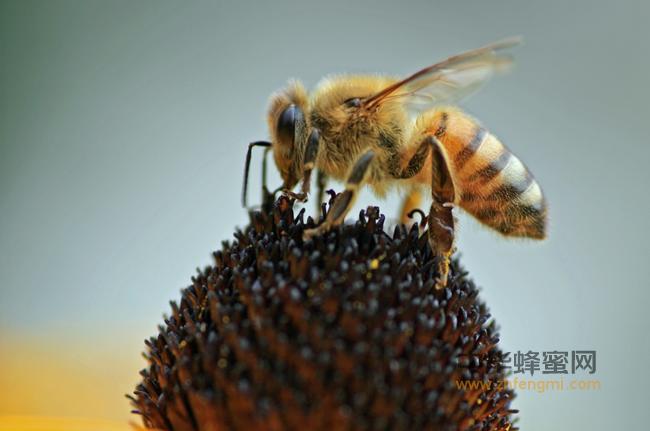 如何使春繁蜂王扩大子圈子脾