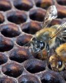 蜜蜂多箱体饲养方法技巧