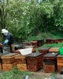 《舌尖2》养蜂人谈拍摄经历:开始以为遇到骗子