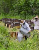 摇蜜时防止被蜜蜂螫的方法