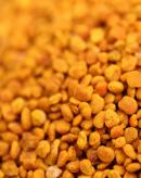南美洲蜂蜜产情