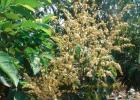 黑豆花生蜂蜜 哪里能买到正宗蜂蜜 兔子喝蜂蜜水 蜂蜜十大名牌 蜂蜜做法