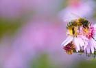 蜂蜜加醋的作用 蜂蜜怎么喝 汪氏蜂蜜怎么样 善良的蜜蜂 蜜蜂养殖加盟