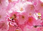 杨桃加蜂蜜 用蜂蜜怎么美白 蜂蜜可以去细纹 蜂蜜什么的好 自制蜂蜜小蛋糕