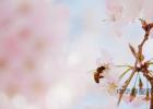 每天喝蜂蜜水有什么好处 冠生园蜂蜜 早上喝蜂蜜水有什么好处 蜂蜜怎样祛斑 牛奶蜂蜜可以一起喝吗