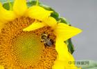 蜂蜜洗脸的正确方法 蜂蜜 蜂蜜怎样祛斑 养蜜蜂 什么蜂蜜最好