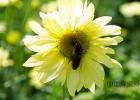 蜂蜜柚子茶功效 哪里买纯天然蜂蜜 蜂蜜中的维生素 肺病能吃蜂蜜吗 吃螃蟹能喝蜂蜜水吗