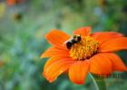 麦卢卡蜂蜜 蜂蜜祛斑方法 蜂蜜怎样祛斑 养蜜蜂的技巧 汪氏蜂蜜怎么样