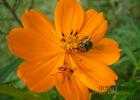 蜂蜜洗脸的正确方法 养蜜蜂的方法 柠檬和蜂蜜能一起喝吗 牛奶加蜂蜜的功效 洋槐蜂蜜价格